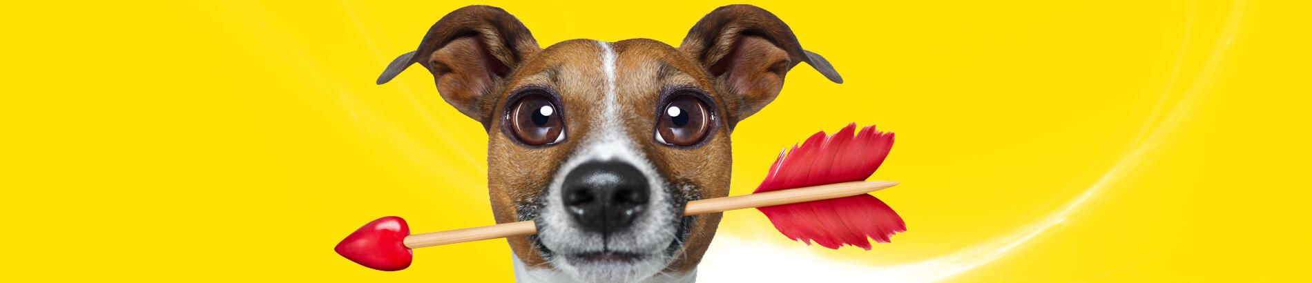 banner-dog