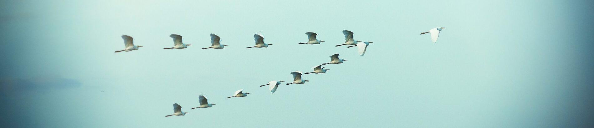 banner-birds